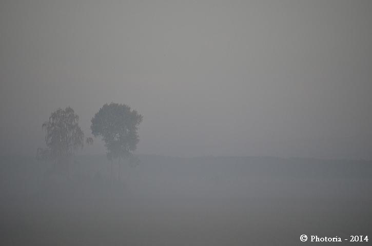 Foggy_1b