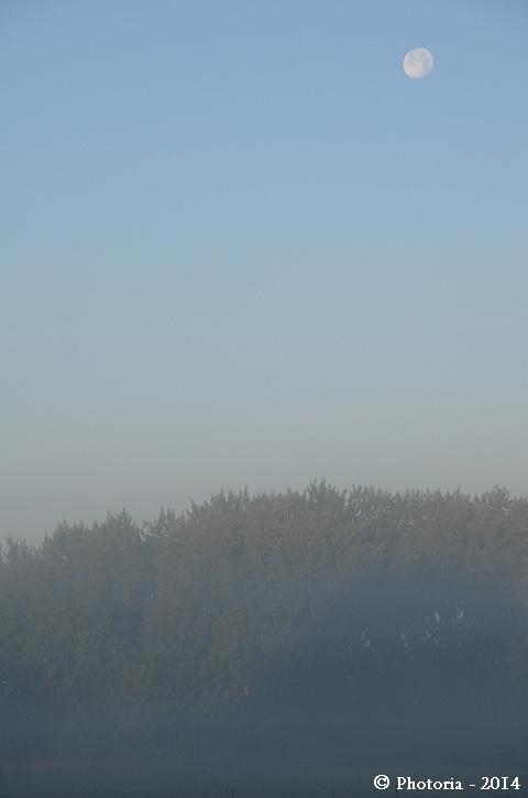 Foggy_1c