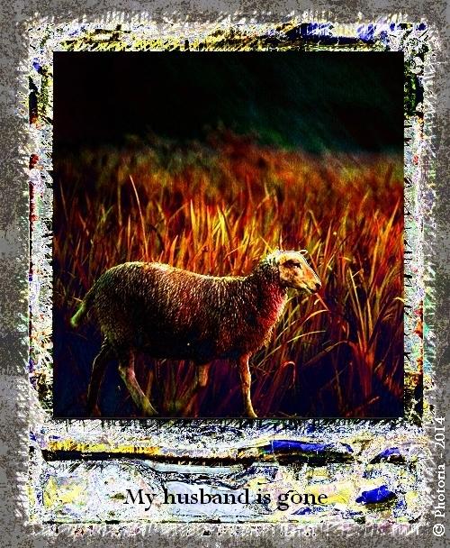 Polaroid_11