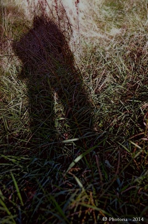 FollowingShadow_1b