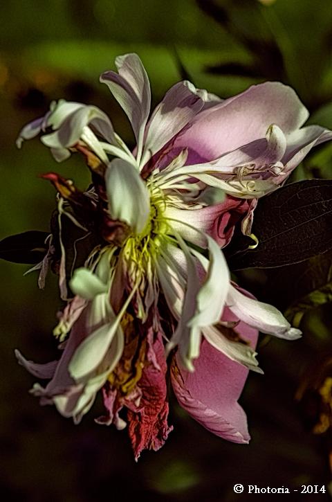 Flores_10a