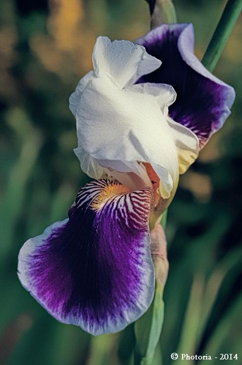 Flores_10b