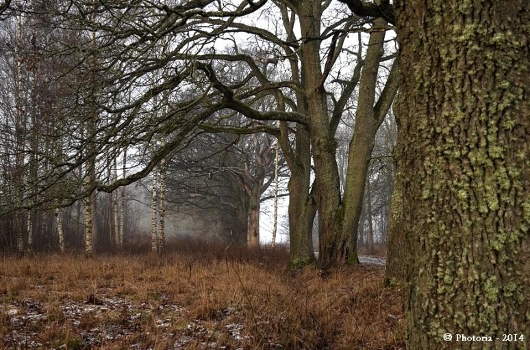 Trees_1b
