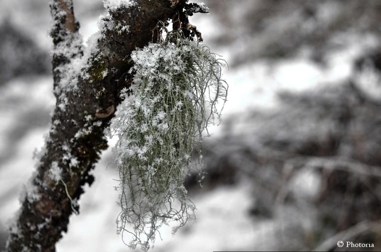 SnowNoDip_1a