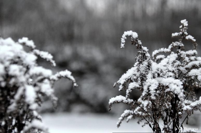 SnowNoDip_1b