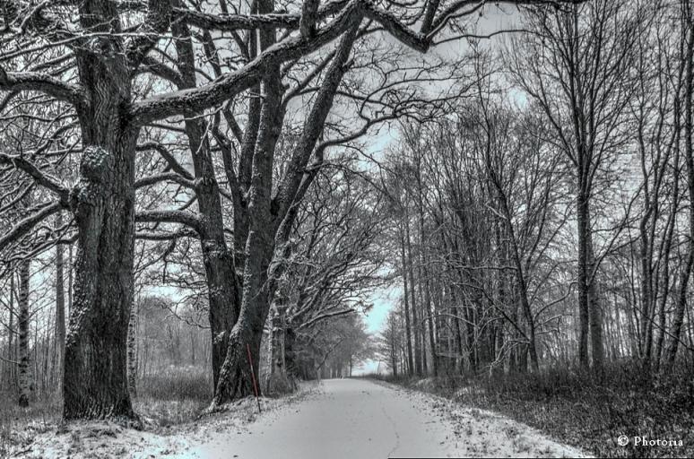 Träd_1a