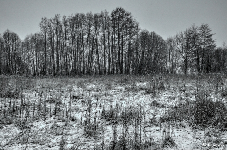 Träd_1b