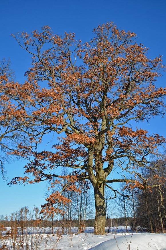 Träd_3b