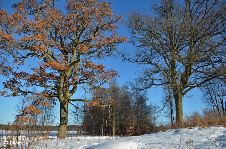 Träd_3c