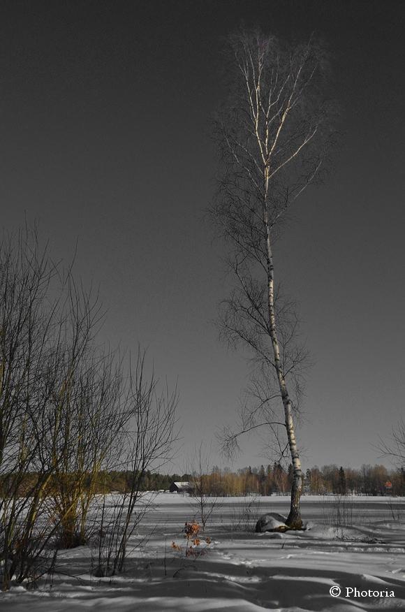 Träd_4b