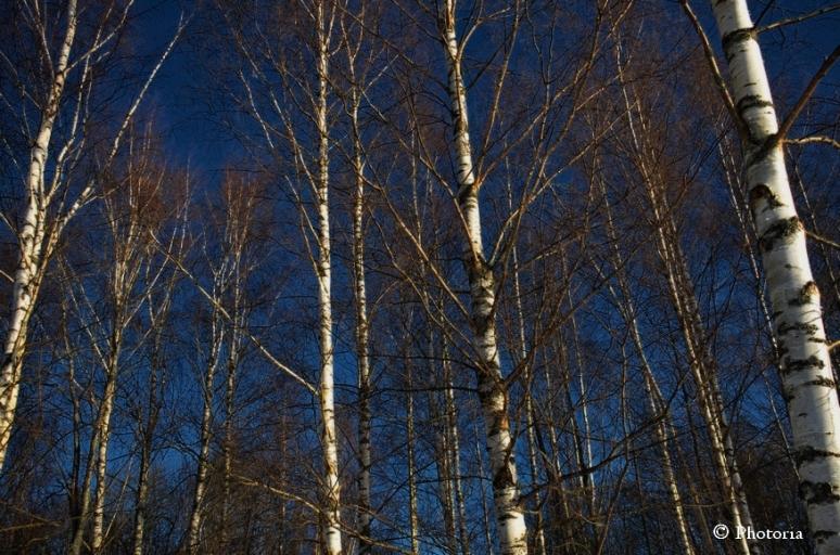 Träd_4c