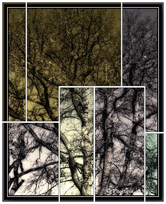 Träd_4d