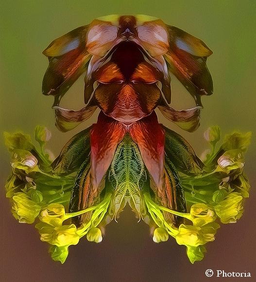 Symmetrized_21a