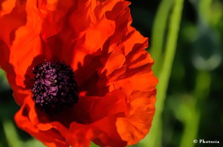 Flower_2a
