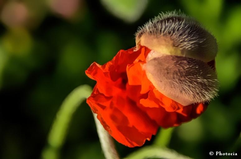 Flower_2c