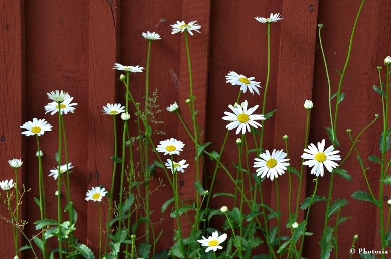 Flower_5a
