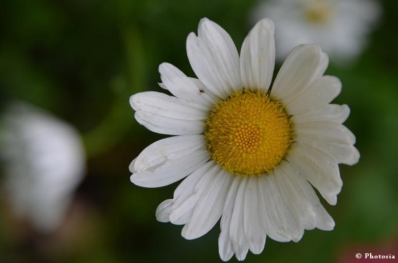 Flower_4c