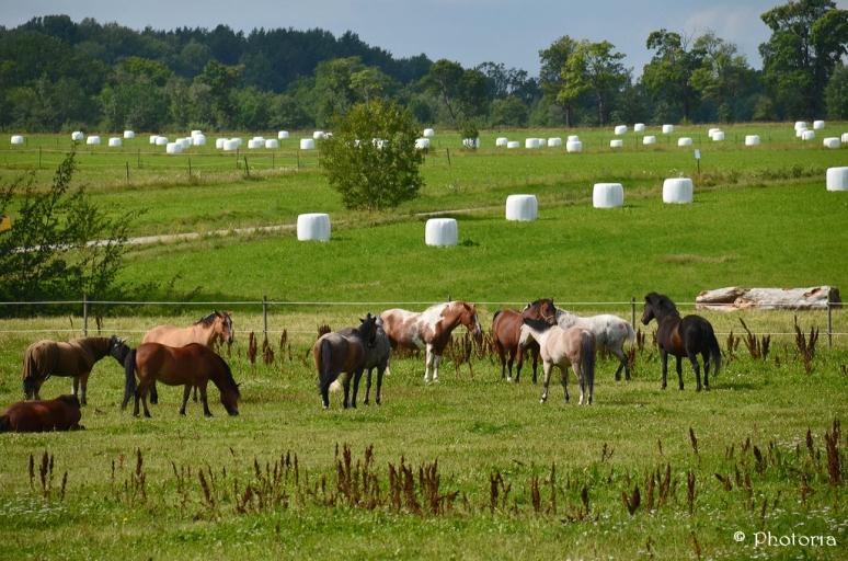 Horses_2a