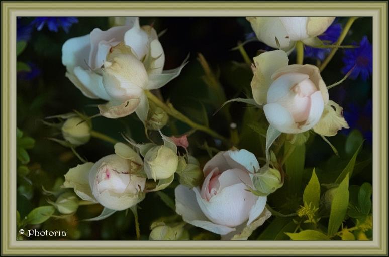 Flowers_9e