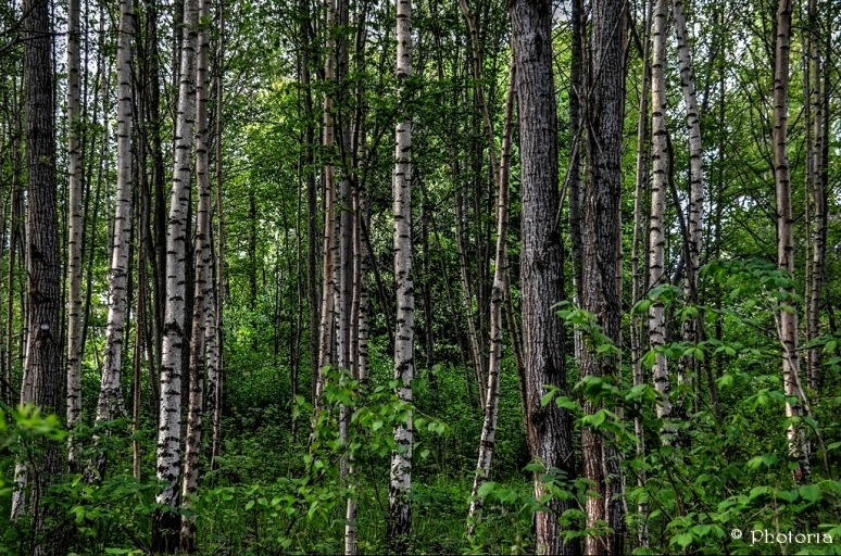 Träd_6b