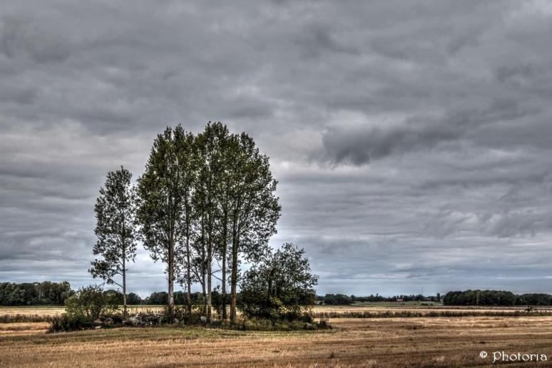 Träd_7c