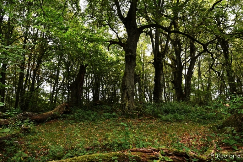Träd_8c