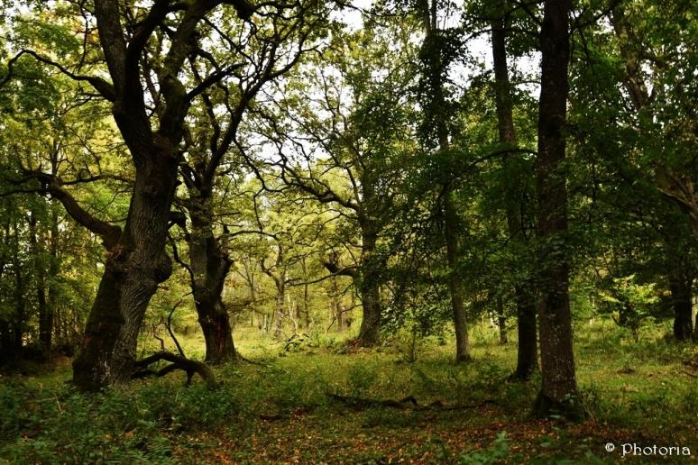 Träd_8d