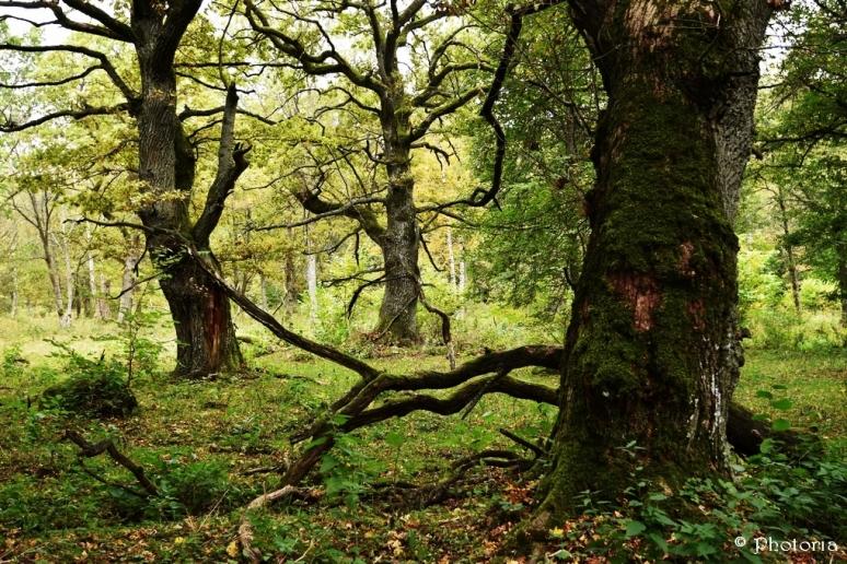 Träd_8f
