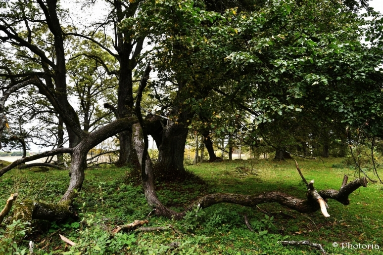 Träd_8h