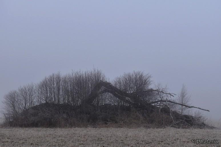 Mist_1