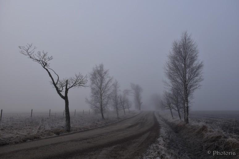 Mist_4