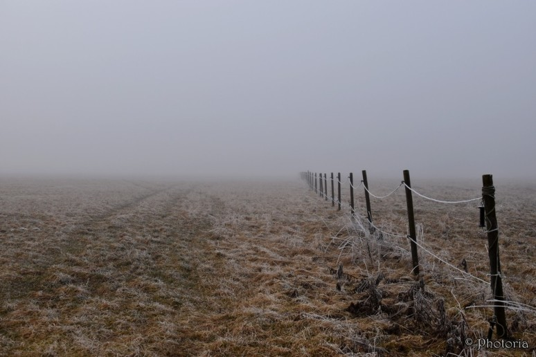 Mist_12