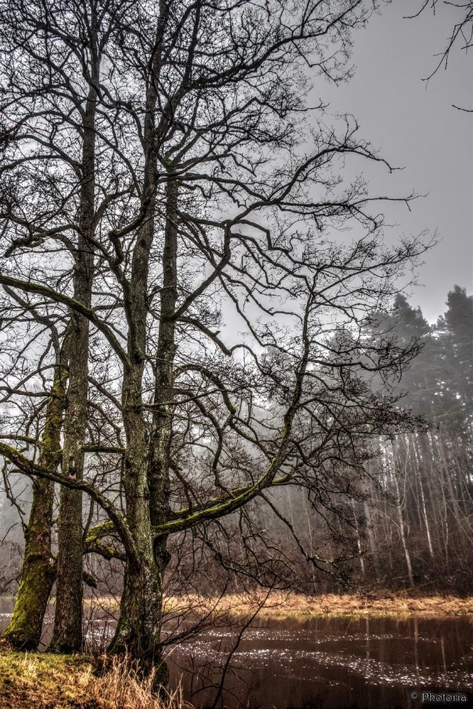 Träd10a