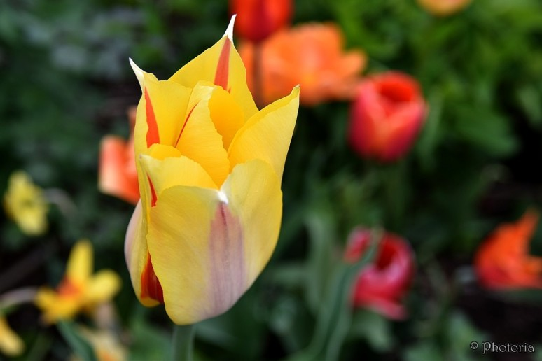 Flowers_10d