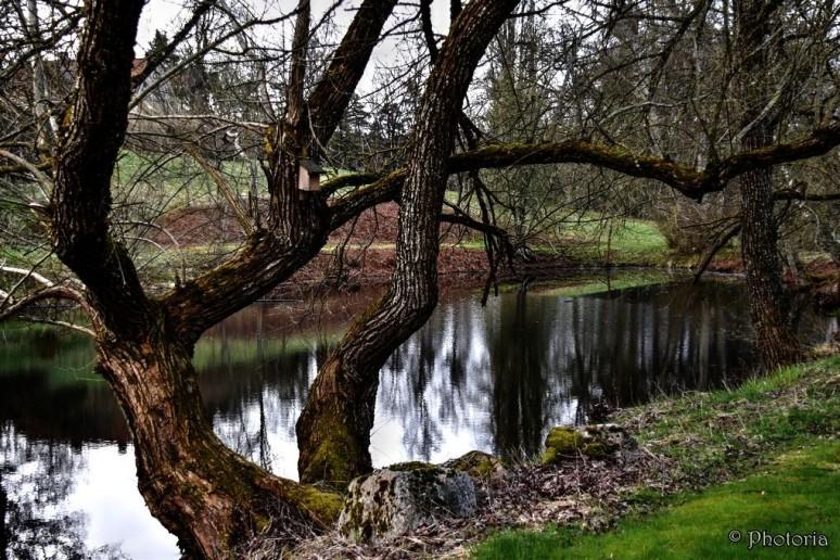 Träd_10d