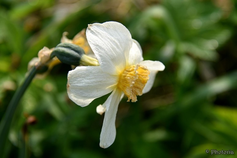 Flowers_11a