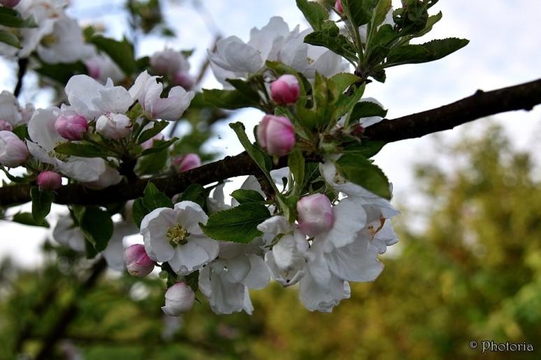 Flowers_11c