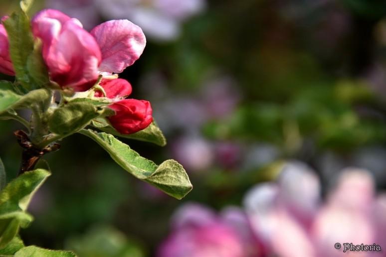 Flowers_11d