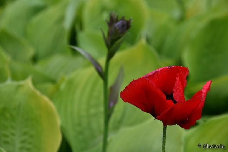 Flowers_12d