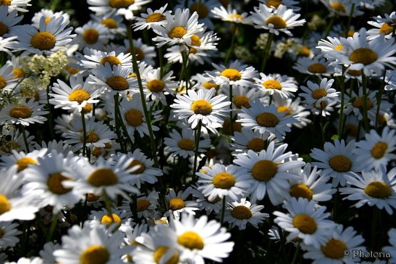 Flowers_13b