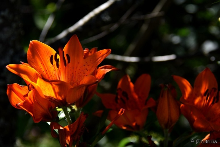 Flowers_13c