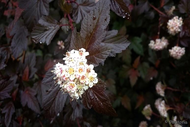 Flowers_14e