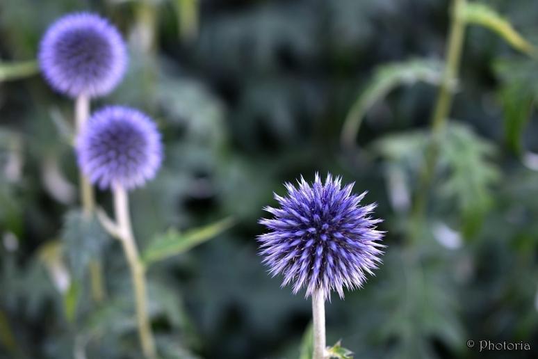 Flowers_16c