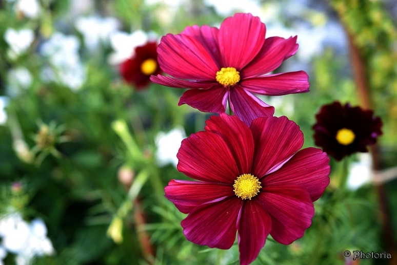 Flowers_16e