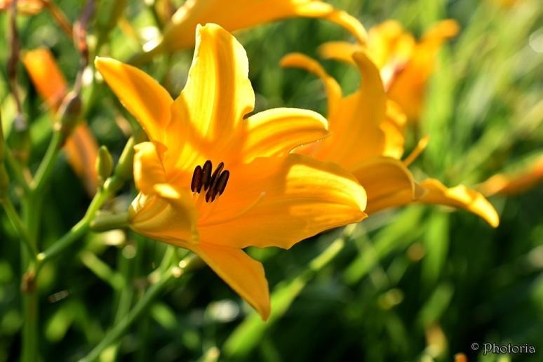 Flowers_17b