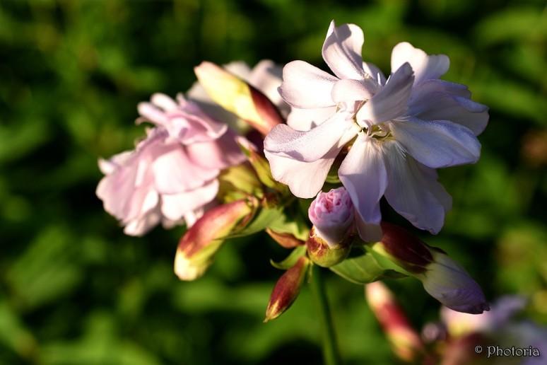 Flowers_17c