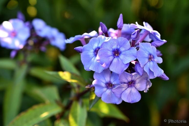 Flowers_17d