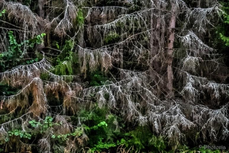 Träd_12b