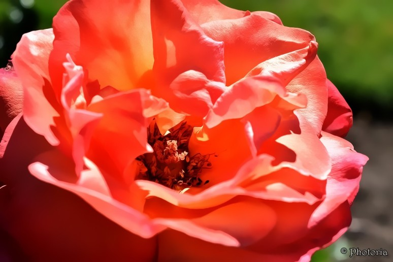 flowers_17f