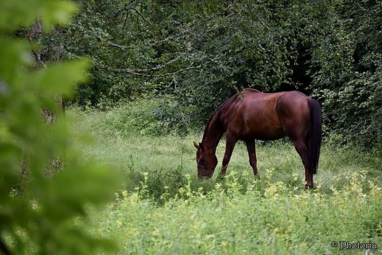 horsecattoad_1